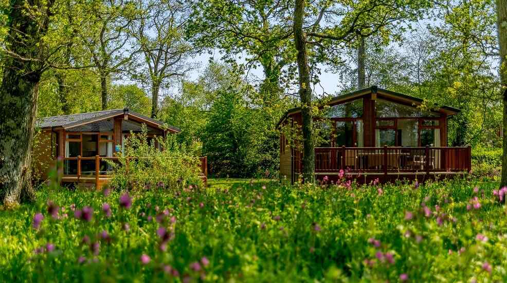 Lodges in a vibrant forest