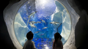 Two children looking at penguins