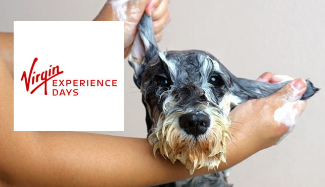 Virgin Experience Days - Dog Grooming